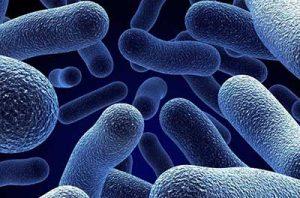 gentamicina batteri