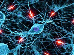 lyrica neuroni