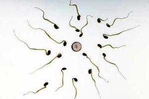 spirale anticoncezionale fecondazione